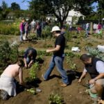 Agricultural Immigrant Workers in Canada Get $1,500 From Government